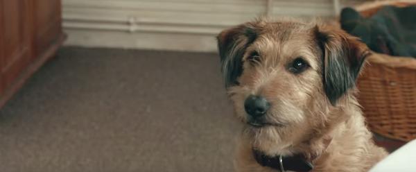 robin-williams-dog-1_0