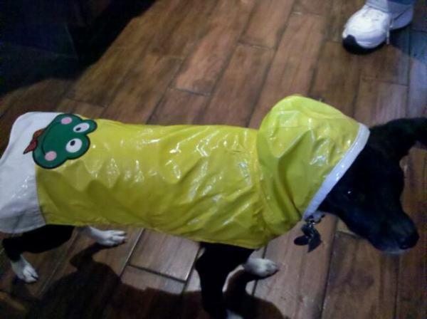 A Scientist Explains Why Dogs Dislike Raincoats
