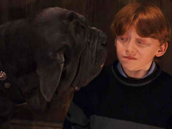 "The 10 Best Dog Names From the ""Harry Potter"" Universe"