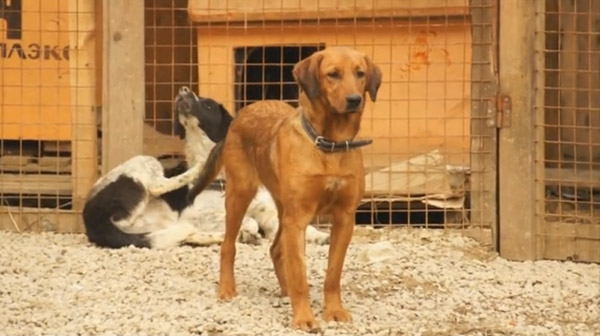 Citizens Work to Rescue Sochi's Dogs Against Daunting Odds