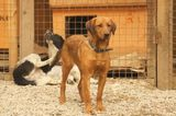 Want to Adopt a Stray Dog from Sochi, Russia? Here's How