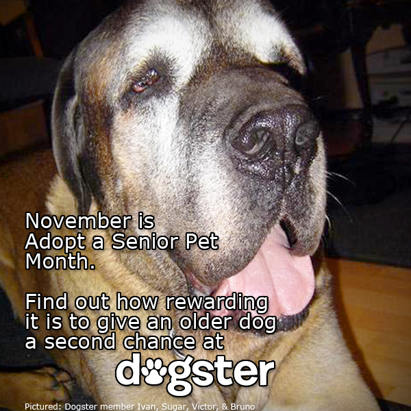 Nominate Your Favorite Dogster Member to Be the Poster Pup for Adopt a Senior Dog Month