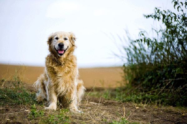 Let's Talk: When Is It Time to Say Goodbye to Your Dog?