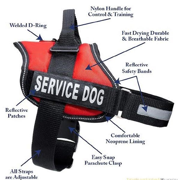 Certified Service Dogs For Sale