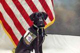 """Dog Bless You"" Philanthropist Donates 170 Dogs to Veterans"