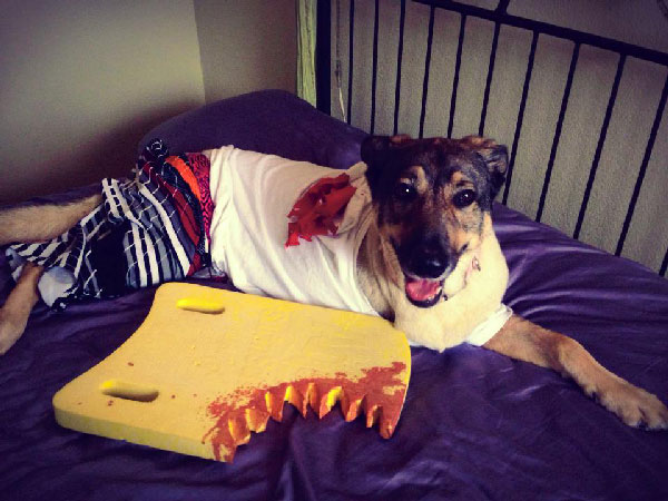 Via & 5 of Our Favorite 2014 Dog Halloween Costumes