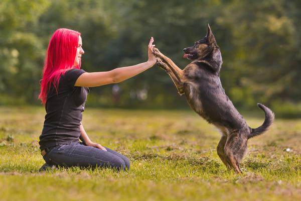 Enter to Win Pet Supplies in the PetCareRx Sweepskates