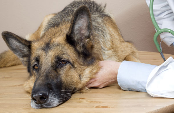 FDA Adds New Rule to Protect Dogs