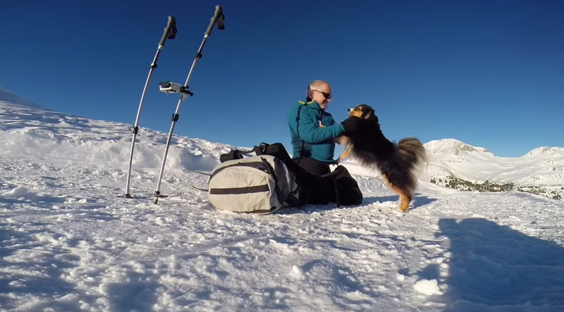 Vid We Love: Watch Sintha the Dog Ski in the Swiss Alps