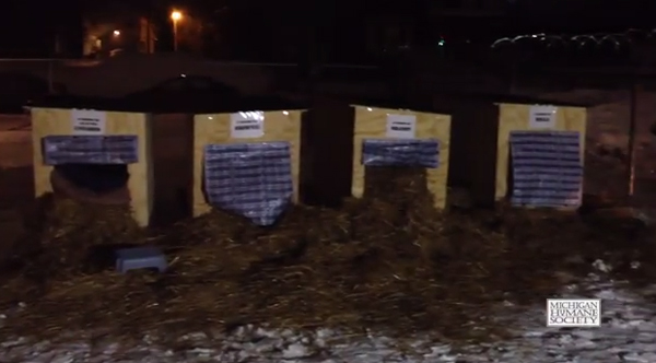 Detroit Animal Advocates Spend a Freezing Night in Doghouses