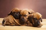 Did You Know You Can Earn Rewards for Searching for Cute Dog Photos on the Internet?