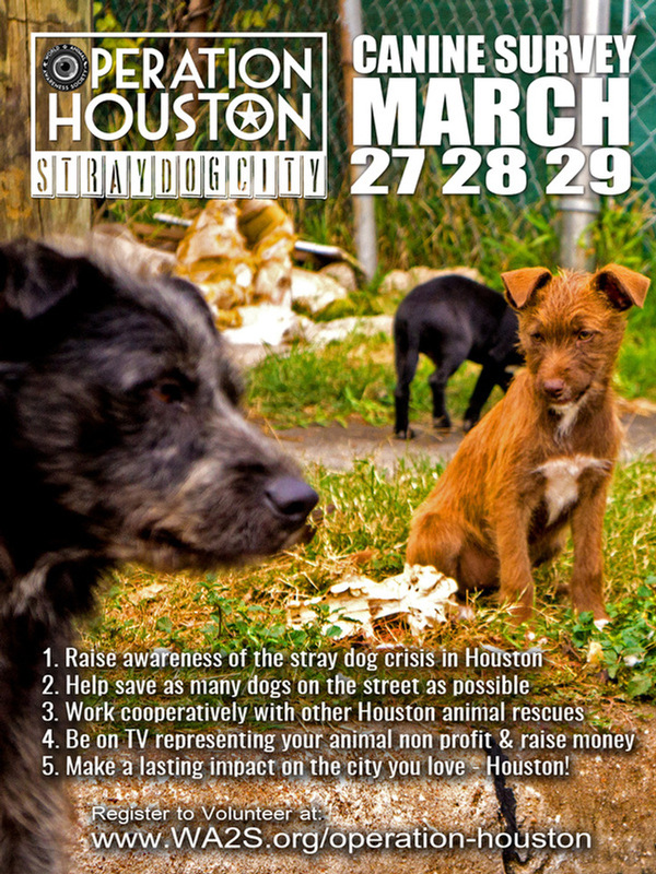 Drones Are Tracking the Stray Dogs of Houston