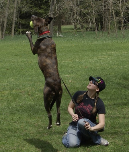 Stiggy's Dogs Trains Companions for Veterans Living with PTSD