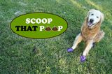 Join Golden Woofs and Dogster on a Mission to Scoop That Poop