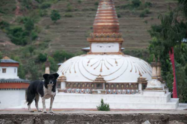 Stray Dogs Were Rampant in Bhutan Until a Spay/Neuter Program Turned Things Around