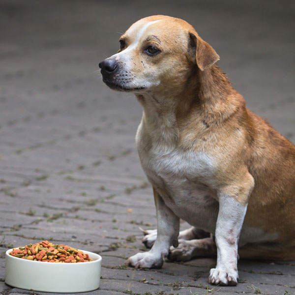 What Can I Feed A Dog With Pancreatitis