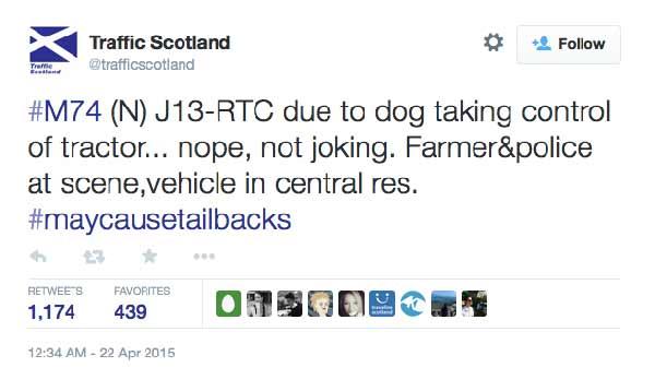 traffic-scotland-don-the-dog_0