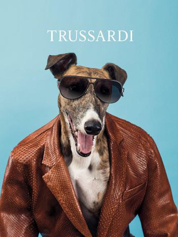 William Wegman Turns His Camera to Greyhounds