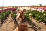 Gardening Advice from a Dog? We're In!
