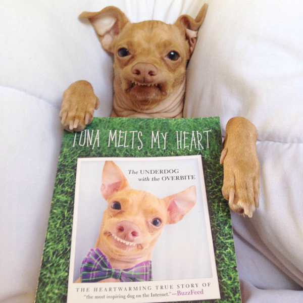 Tuna, the Chiweenie With an Overbite, Has a Book Out! - photo#9