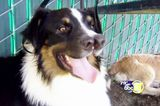 Would You Adopt a Dog WIth Two Noses? Meet Two-Nose Toby