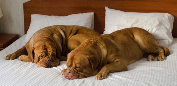 14 Dog-Friendly Hotels and Motels to Stay at This Holiday ...