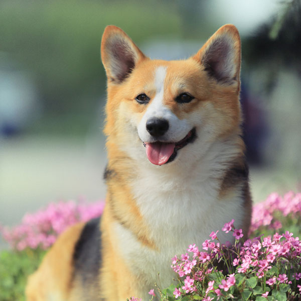 Cute Pet Names For A Girl Dog