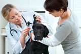 Ask a Vet: Why Did My Spayed Dog Get a Sickness Usually Seen in Unspayed Dogs?