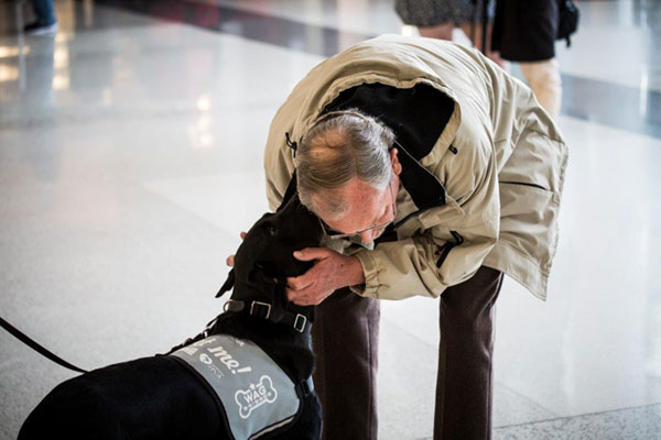 Dogs In San Francisco Airport S Wag Brigade Are Trained To