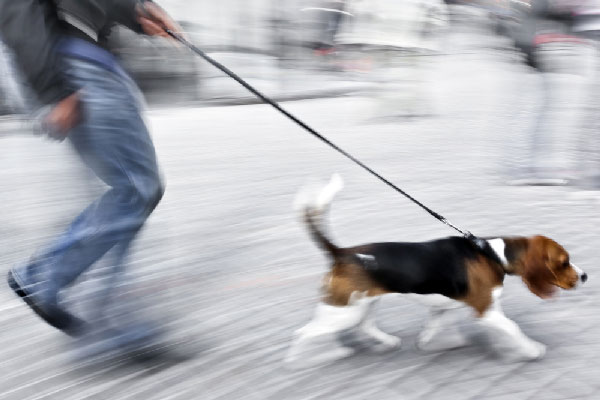 Chicago Residents Could Face Hefty Fines in 2015 for Unlicensed Dogs