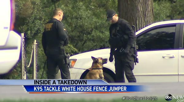 Meet the Secret Service Dogs Who Stopped a White House Fence Jumper
