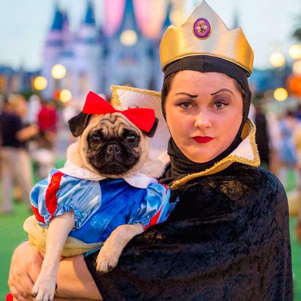 Výsledek obrázku pro pug look like a disney princess