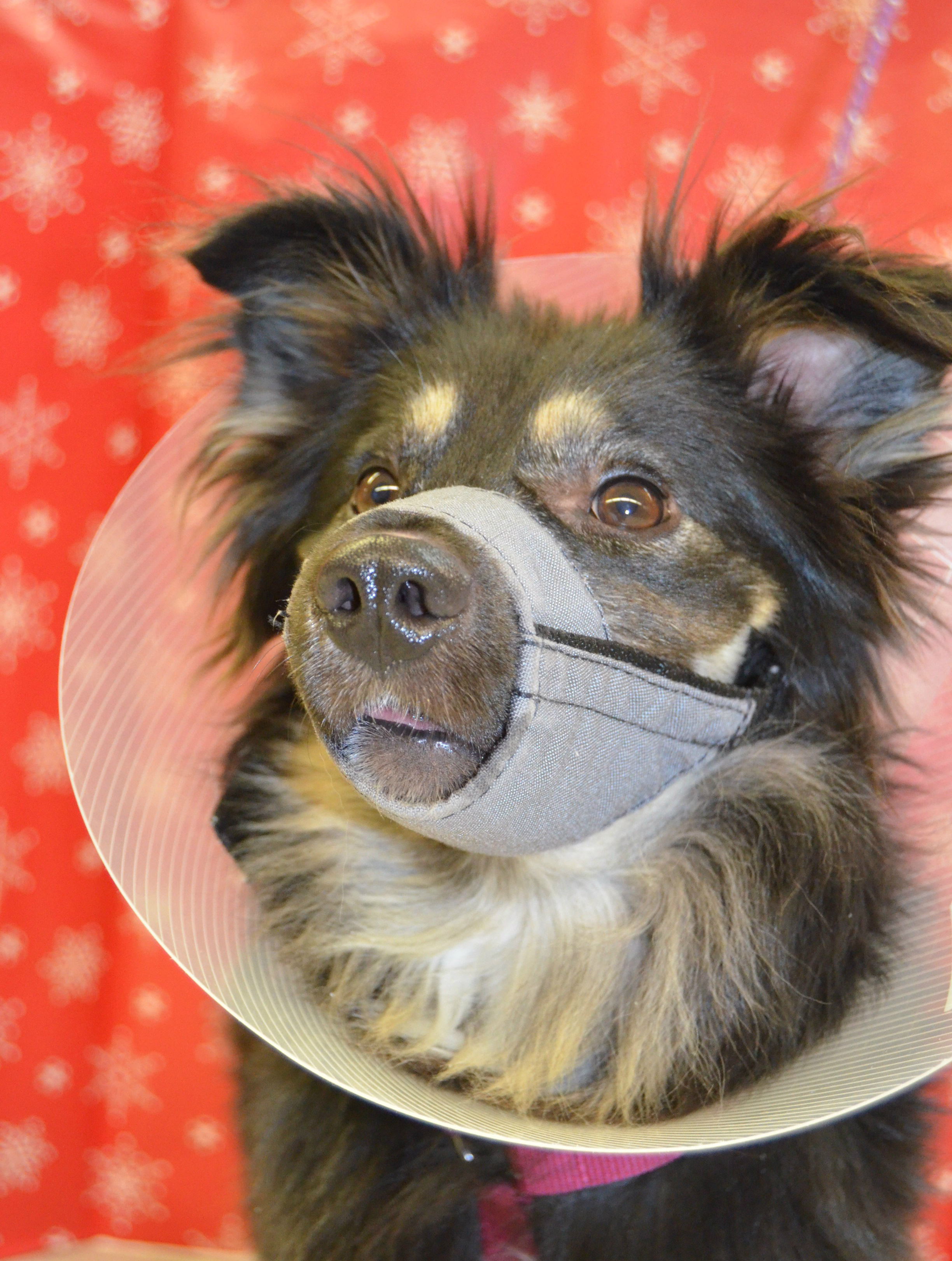 Wilson and His Canine Family Were Saved After He Was Shot in the Mouth