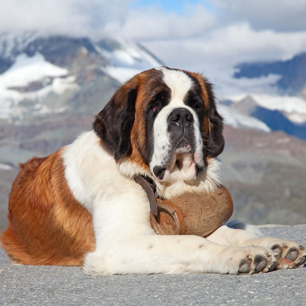 Caring For Your Dog During Extreme Winter Weather