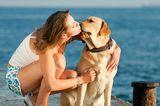 Get to Know the Labrador Retriever: America's Sweetheart