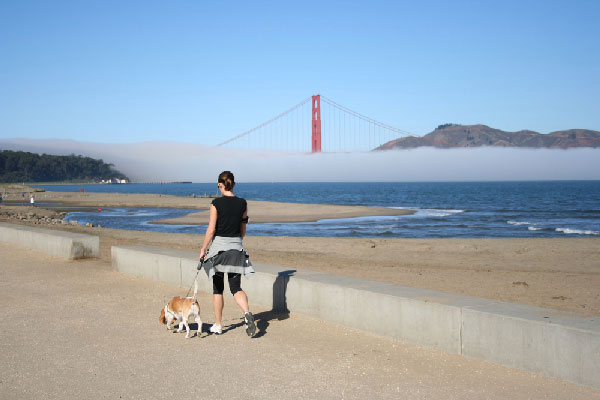 Over 43,000 Petitioning Against Leash Laws in San Francisco. Does New Policy Go Too Far?