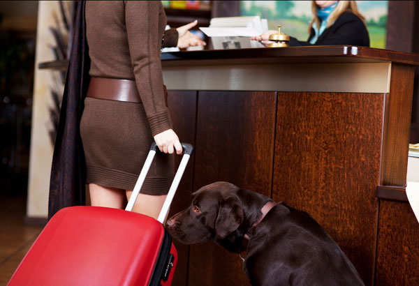 The 5 Best Dog-Friendly Hotel Chains in the U.S.