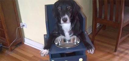This Viral Picture Of A Cute Dog In A High Chair Is More Than It Seems