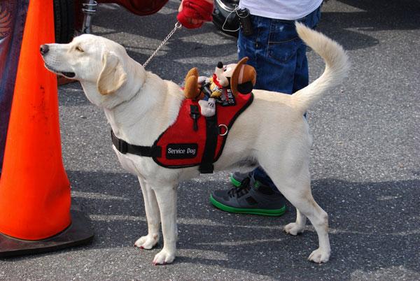 A service dog at work.
