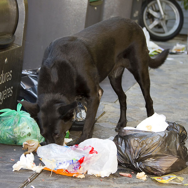 Petsmart  Pound Pedigree Dog Food