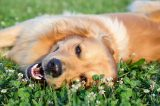 Young dog playing in meadow by Shutterstock.