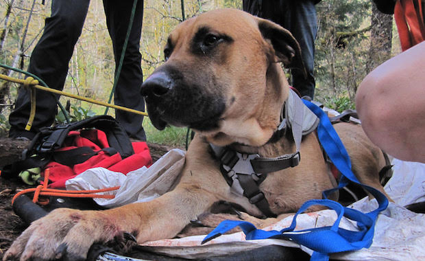 Oregon Humane Society Rescue Team Saves Dogs Who Have Fallen Off Cliffs