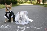 Did Your Dog Get Married? Or Take Part in Your Ceremony? 'The Dog Wedding' Wants the Pics