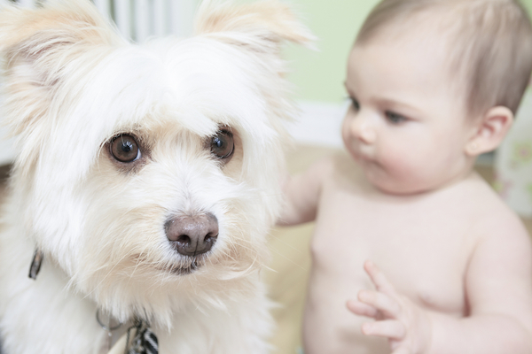 A baby and a white dog.