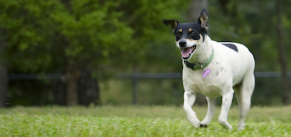 Best Frisbee Dogs – Top 10 List of Disc Dog Breeds | Dog's ...