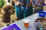 A dog looking at a beer.