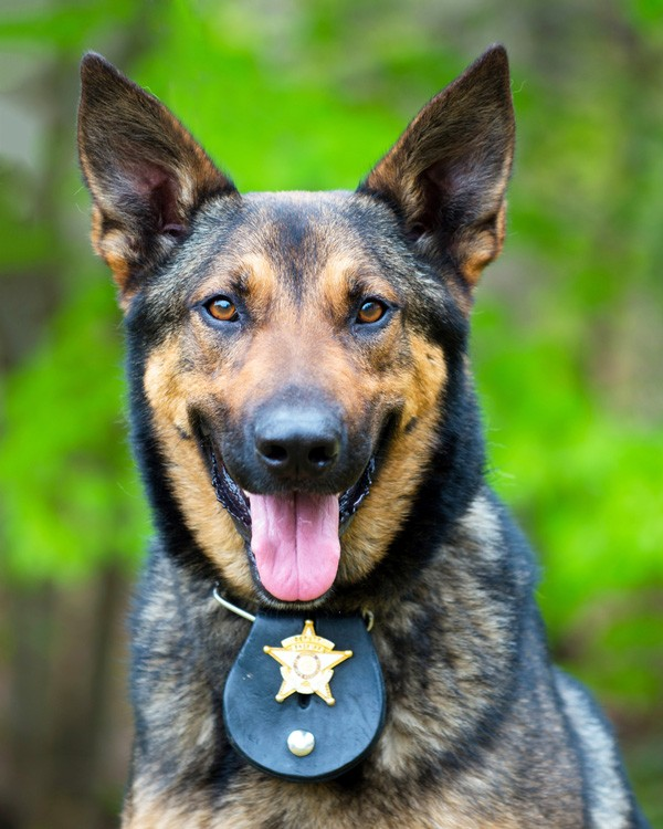 A working police dog.