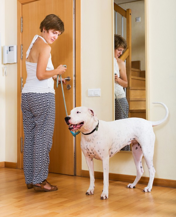 A woman with a Dogo Argentino dog.