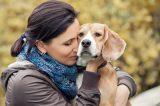 A beagle getting hugged by a human.