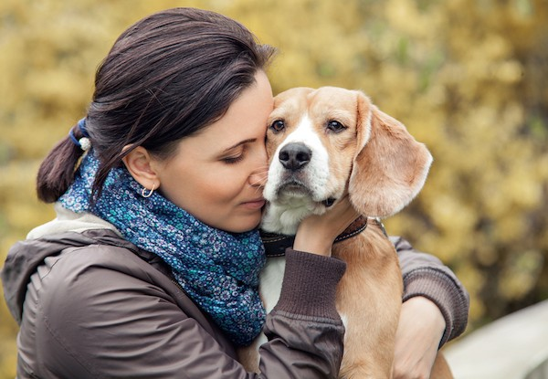 A beagle getting hugged by a human.